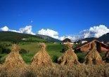 Mairhof - Getreide