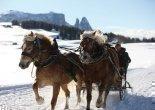 Pferdeschlittenfahren auf der Seiser Alm